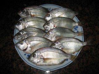 Cosas escenciales para pescar para los amantes de la for Como criar mojarras