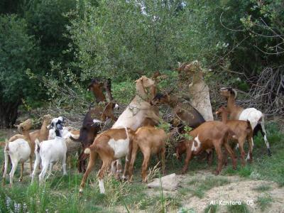 20130124180544-embalse-cabras.jpg