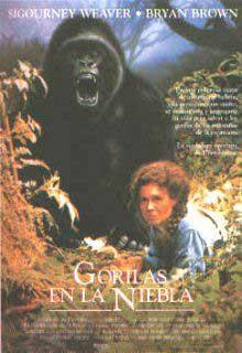 20090418135342-gorilas.jpg