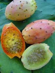 20120109141030-opuntia-ficus-indica-frutos.jpg